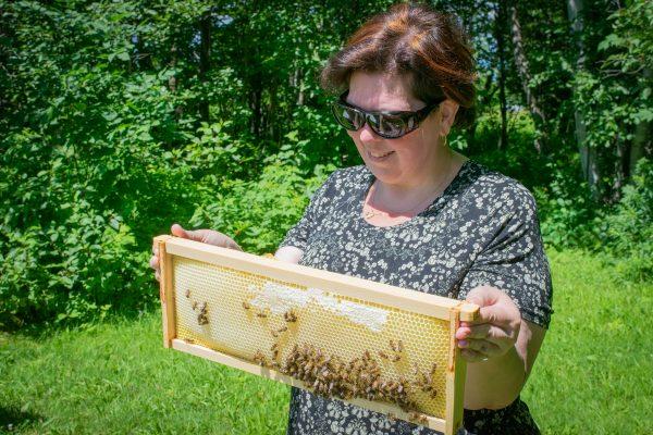 Découvrir le travail des abeilles